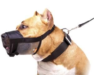 аксессуары для собак фото