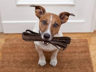 Амуниция и аксессуары для собак фото